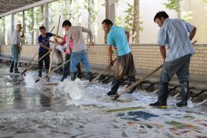 ゾランヴァリ 洗浄2016