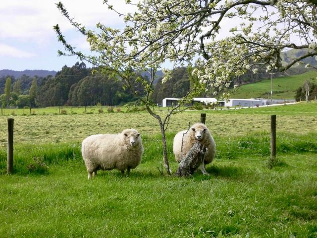 羊たちのそのままの色のアートギャッベ
