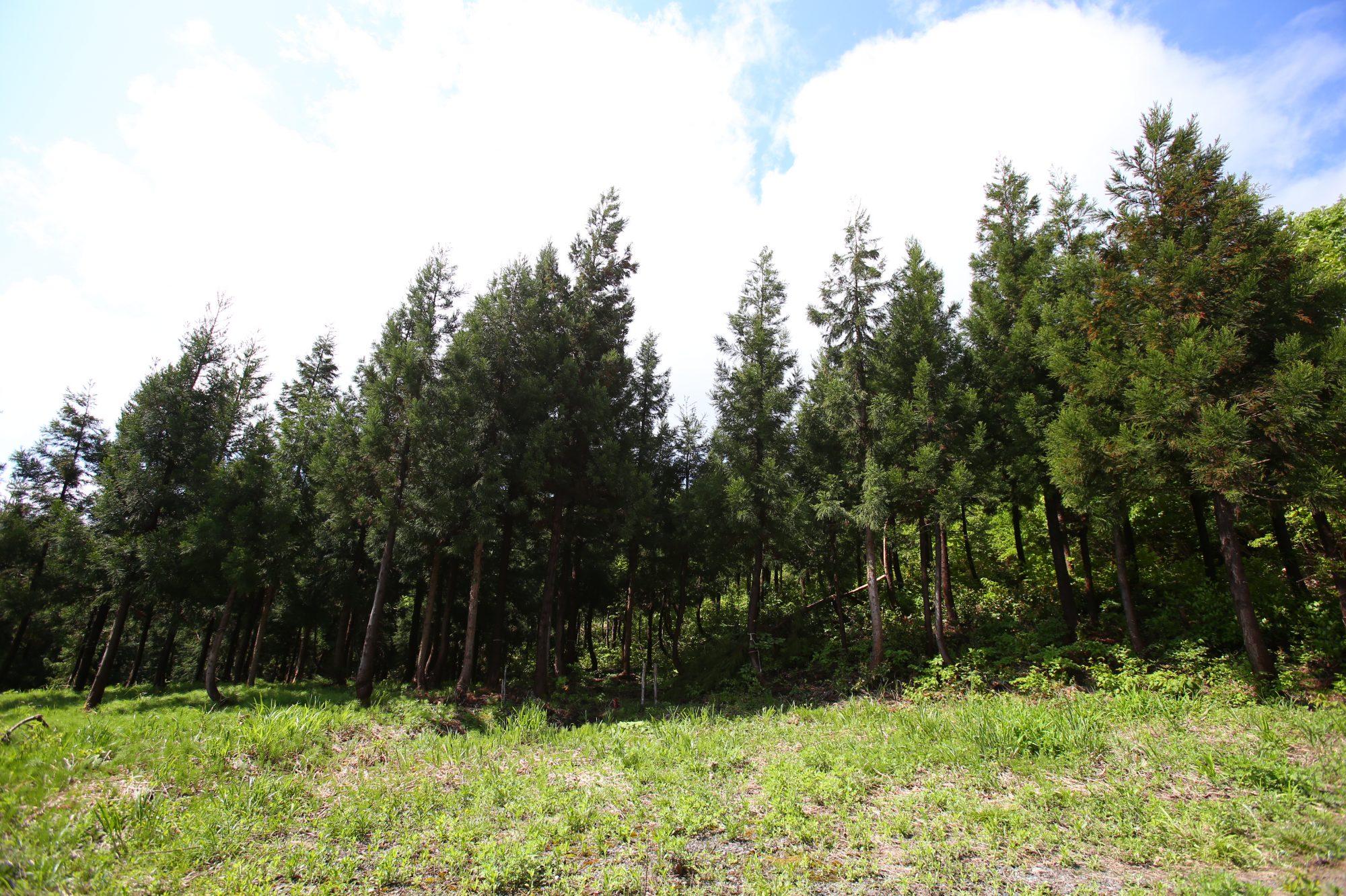 林業研修リポート