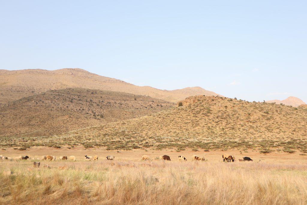 遊牧民が生活するザクロス山脈