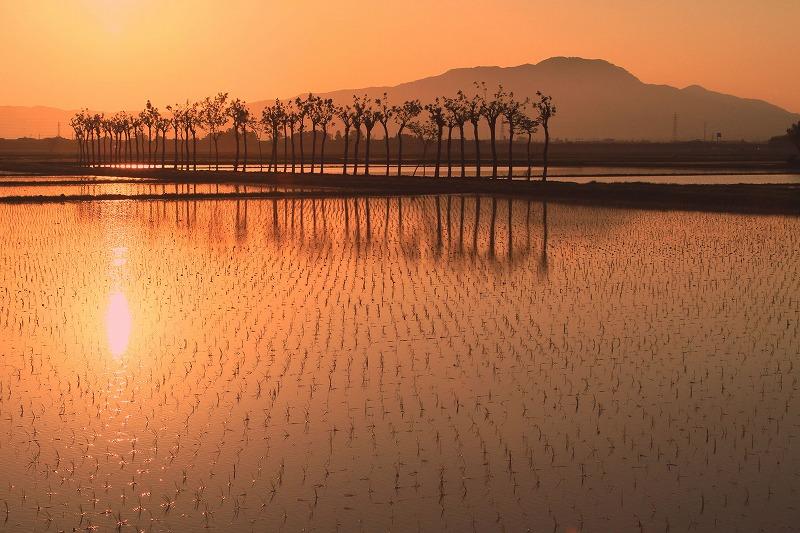 田んぼに映る夕日が沈みゆく風景